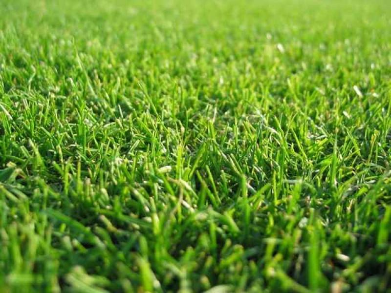 Trawnik z rolki Legionowo